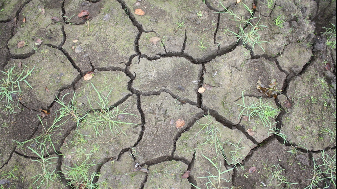 Parched earth in the UK