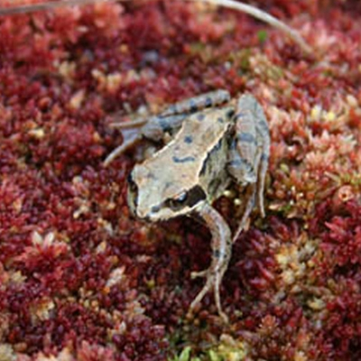 Girley Bog Eco-Walk at Trailhead